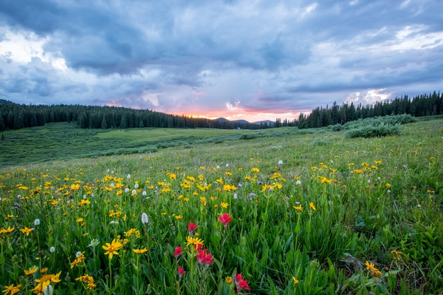 best spring destinations in the usa